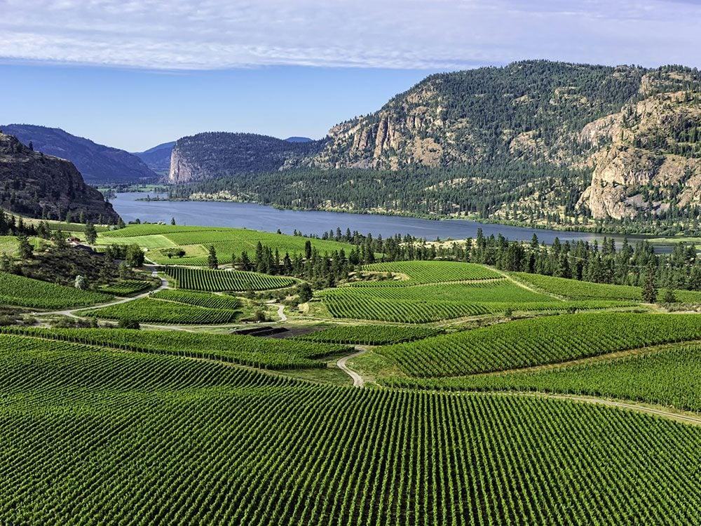 Canada road trip - Okanagan Valley winery