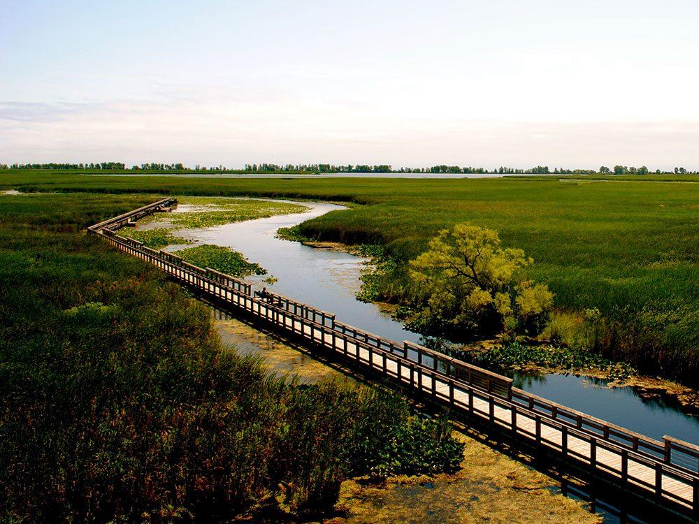 Canada road trip - Pelee Island marsh boardwalk