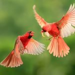 Winged Wonders: 15 Beautiful Canadian Birds Captured on Camera
