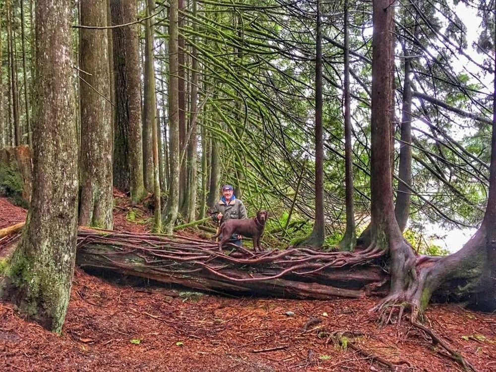 Giant twisted tree roots