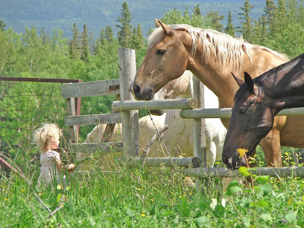 Little girl conversing with a big horse