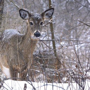 Amazing Wildlife Photography From Rattray Marsh Conservation Area