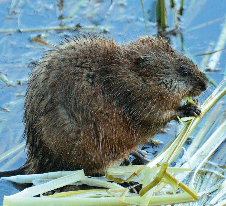 Rattray Marsh wildlife photography