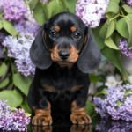 See the 40+ Cutest Dog Breeds as Puppies