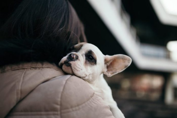 Young casually dressed woman holding her adorable French bulldog puppy. Close up shot with wide angle lens. City street in background. Selective focus on dog's head.