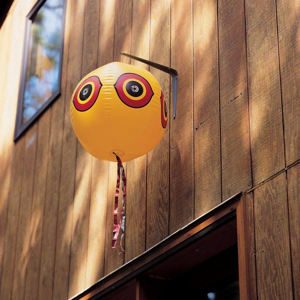 Bird scale balloon