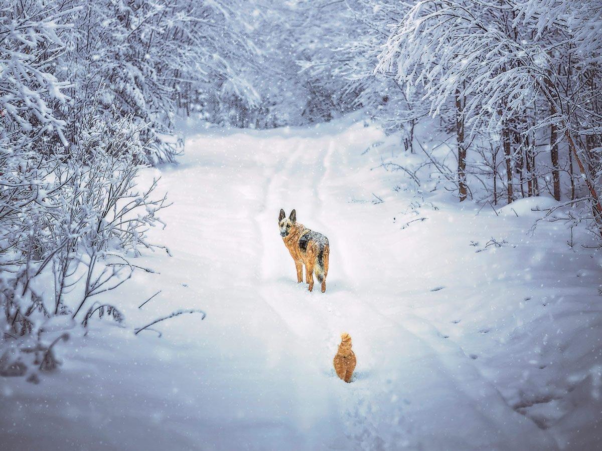 Dog in winter landscape