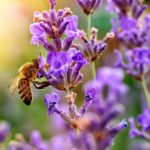 10 Bee Friendly Plants Worth Adding to Your Yard