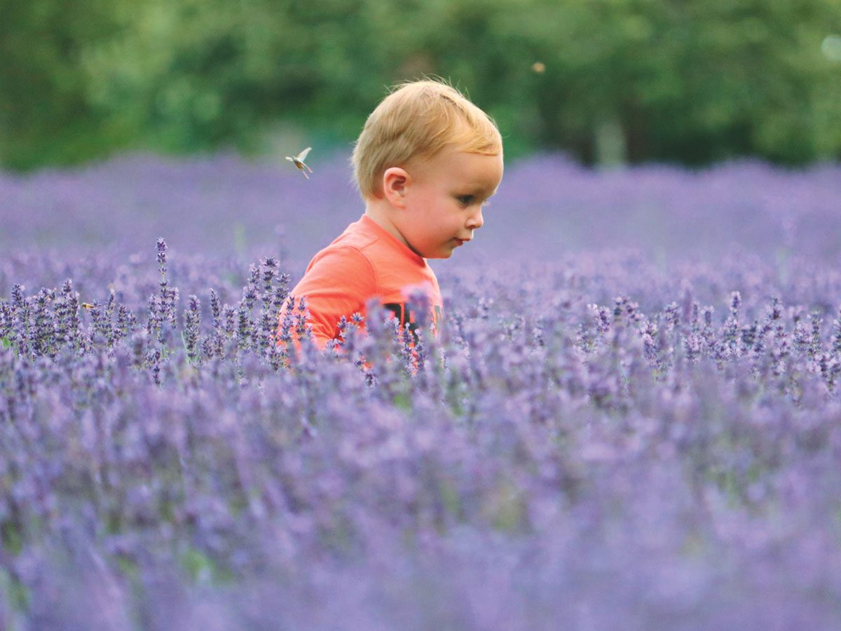 Baby in a lavender farm