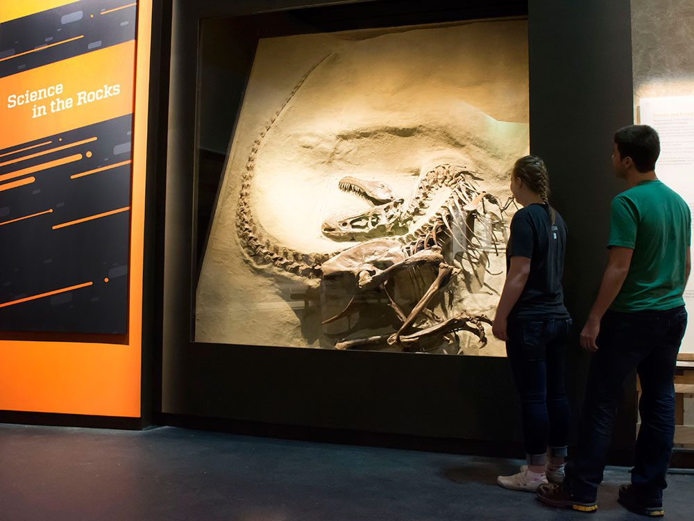 Day trips from Calgary - Royal Tyrrell Museum