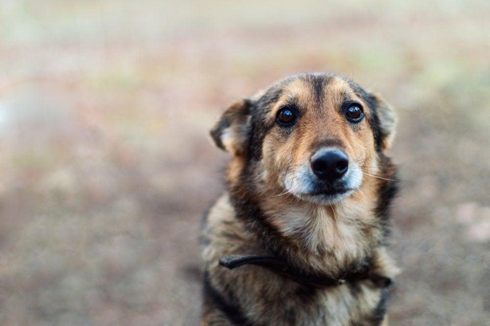 stray dog with very sad smart eyes