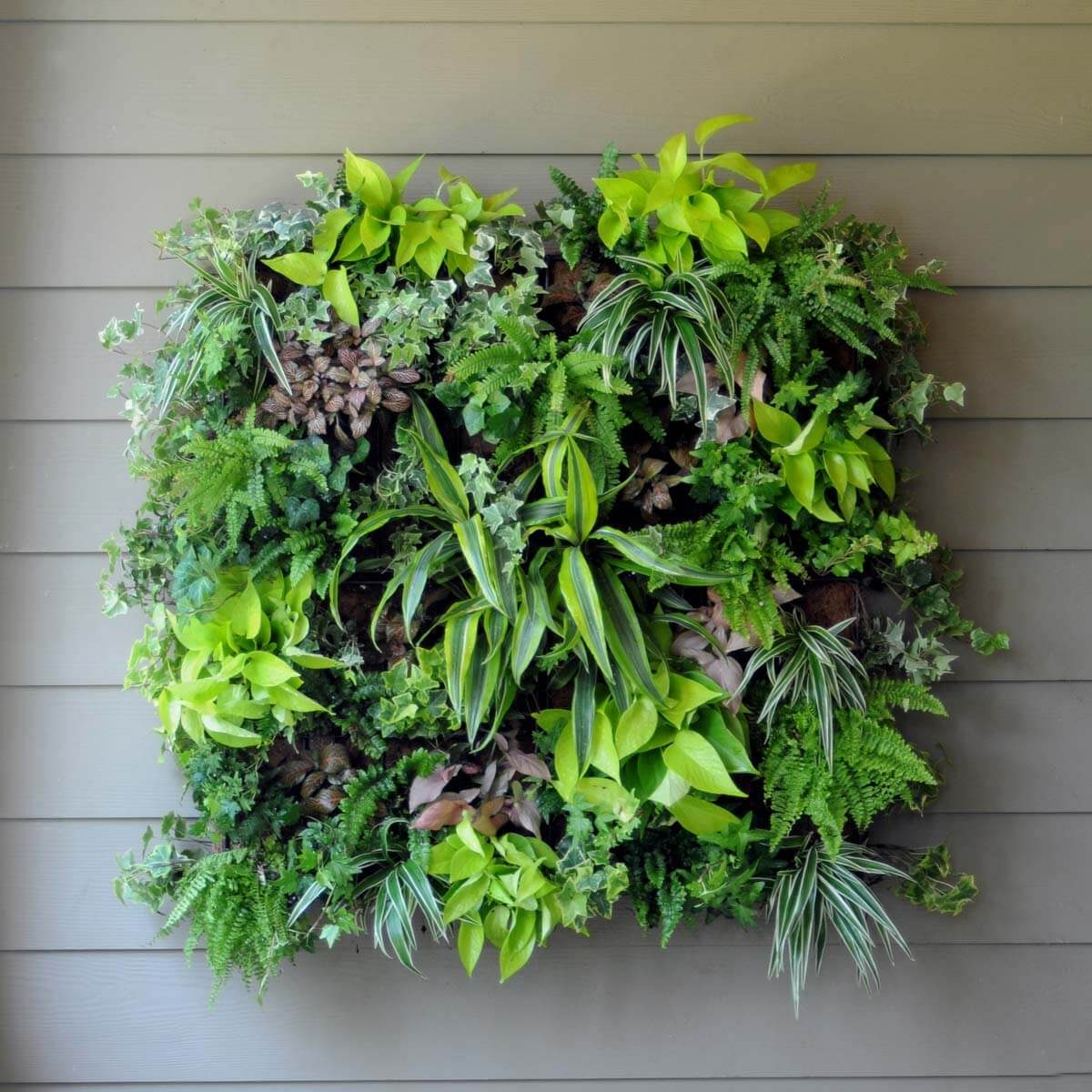 living wall planter _19