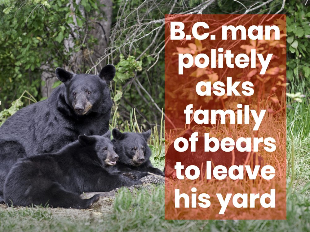 Family of black bears
