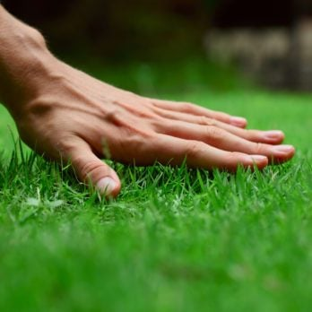 7 Organic Lawn Care Tips to Try This Year