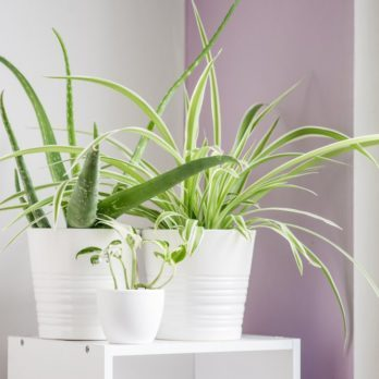 The 18 Best Air-Cleaning Plants, According to NASA