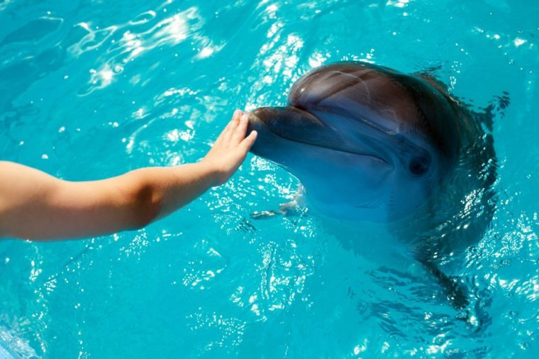 Man hand touch a dolphin