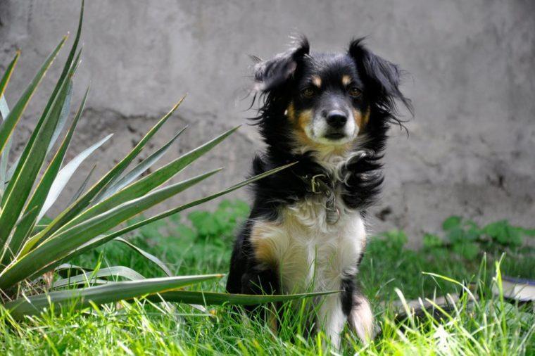 Домашняя любимица на зелёной траве.