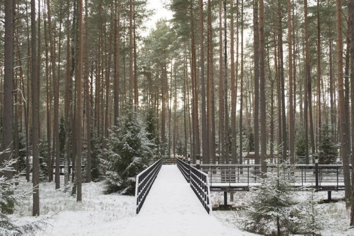 the Katyn forest and scaffold in it