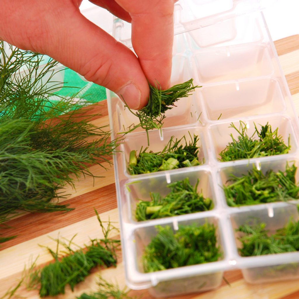 freezing the dill in ice cube mould for winter; Shutterstock ID 38673409