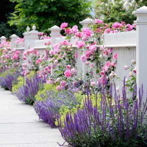 Simple landscaping ideas - pink roses on white fence