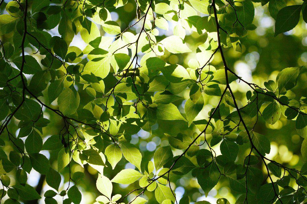 Green leaves against sky