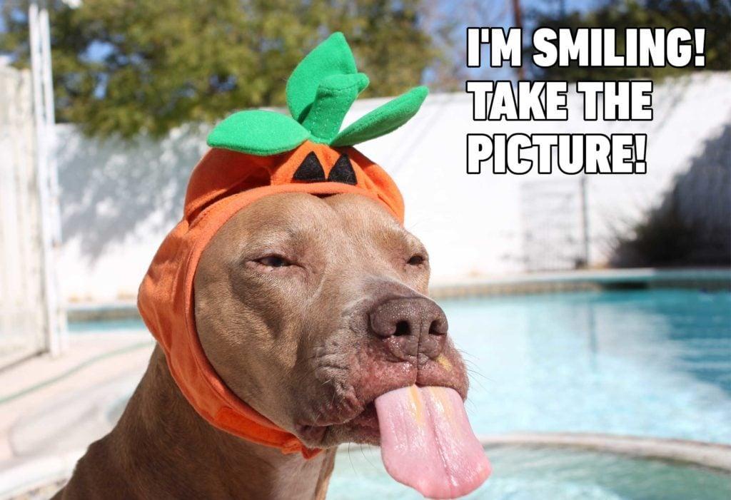 dog pumpkin meme