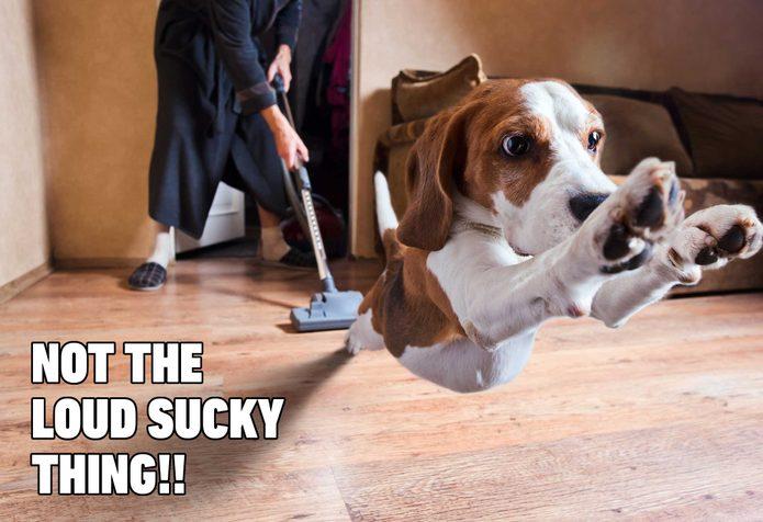 dog vacuum meme