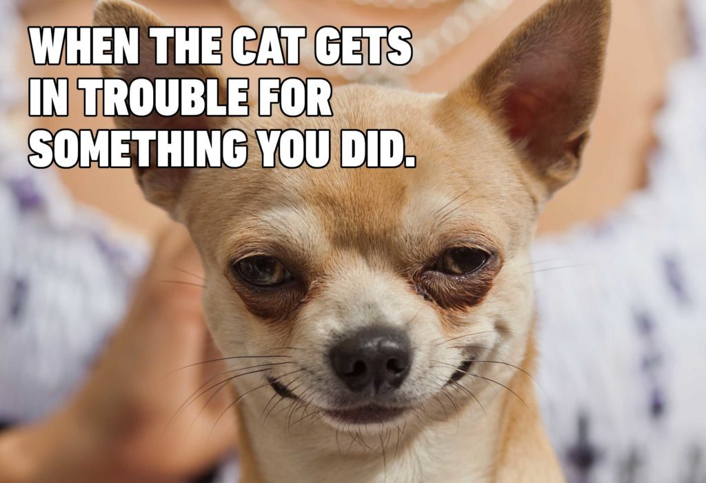 15 Hilarious Dog Memes You'll Laugh at Every Time | Reader ...