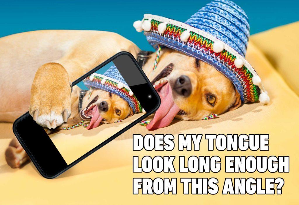 dog selfie meme