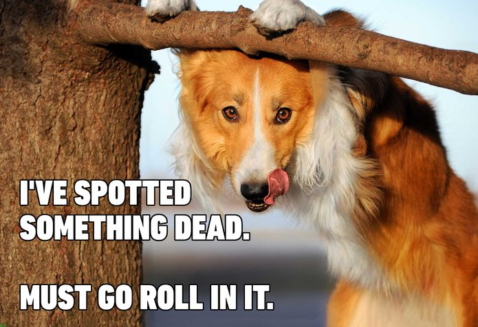 dog smell meme