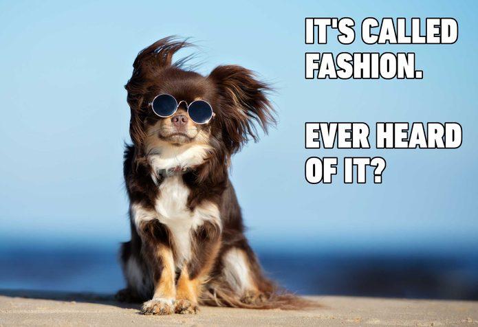 dog meme fashion