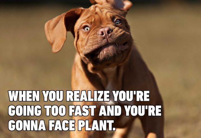 dog meme face plant