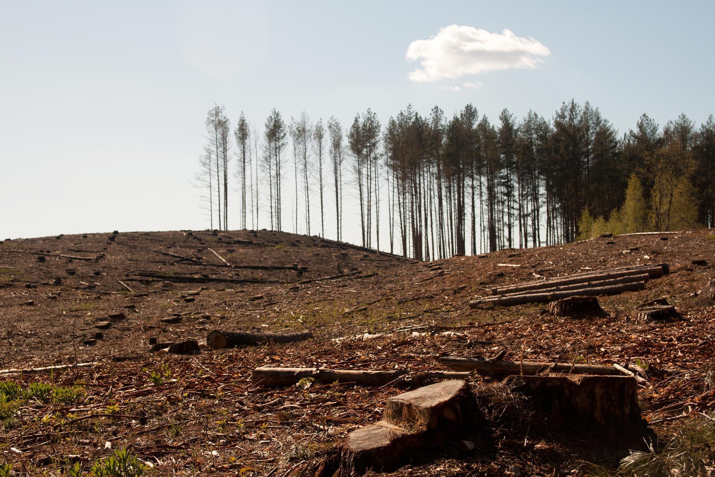 deforestation cut down trees