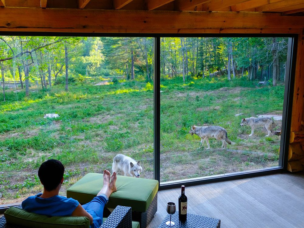 Canadian attractions - Parc Omega wolves