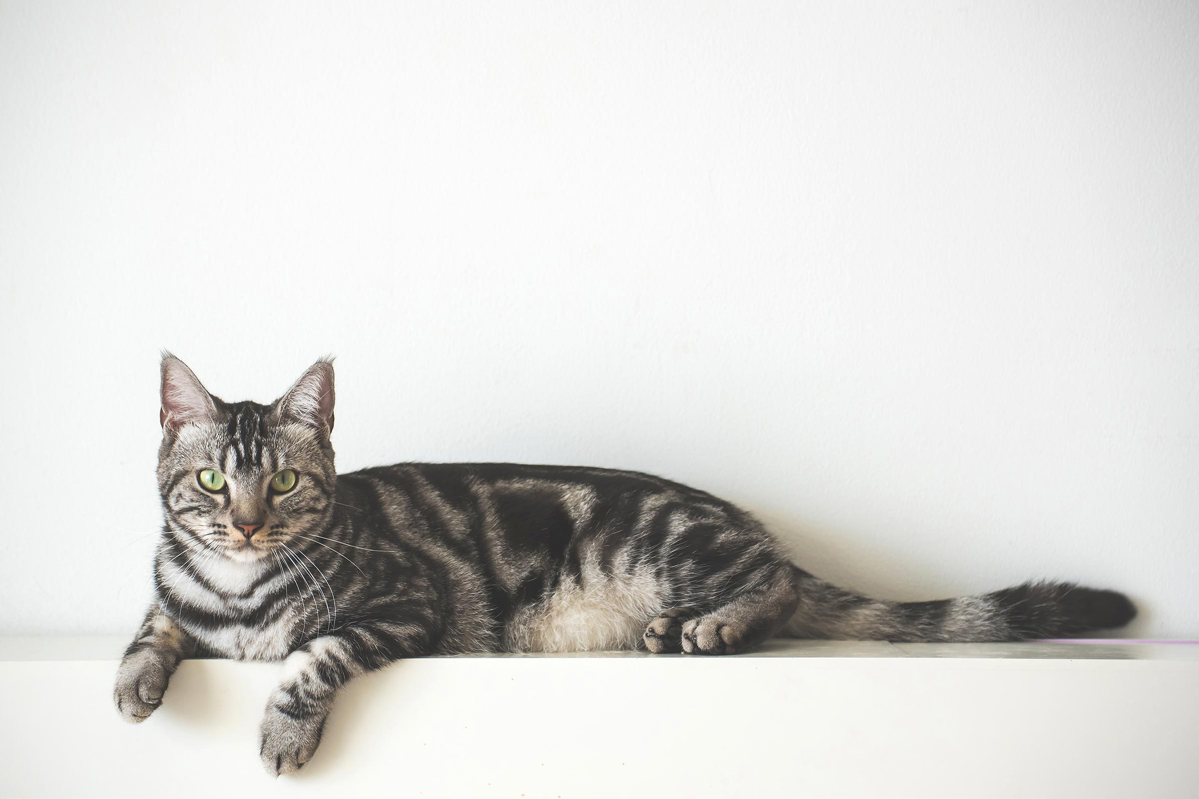 cat lying on heater