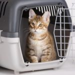 The 10 Easiest Ways to Get Rid of Pet Odour