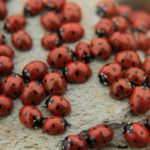 Follow These Simple Steps to Prevent a Ladybug Infestation