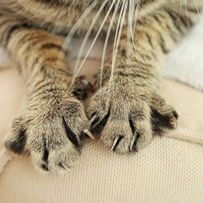 Here's How to Keep a Cat from Scratching the Furniture