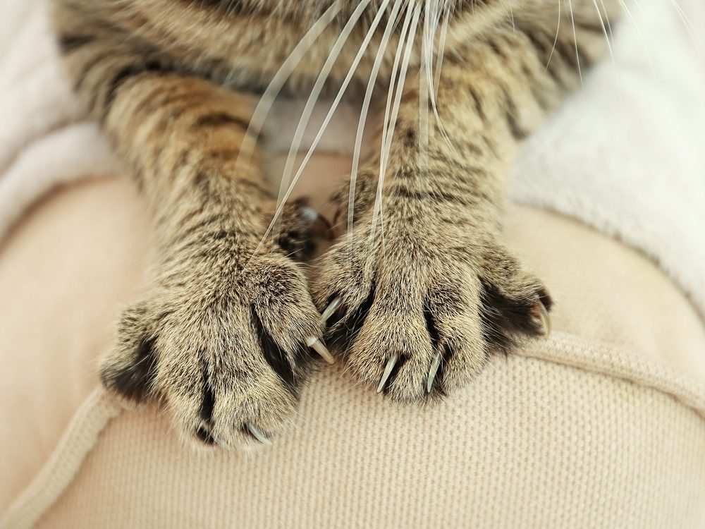 Here S How To Keep Your Cat From Scratching The Furniture
