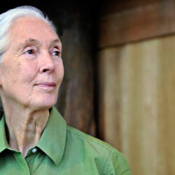 Jane Goodall's Africa: 5 Places Where You Can Walk in the Environmental Icon's Footsteps