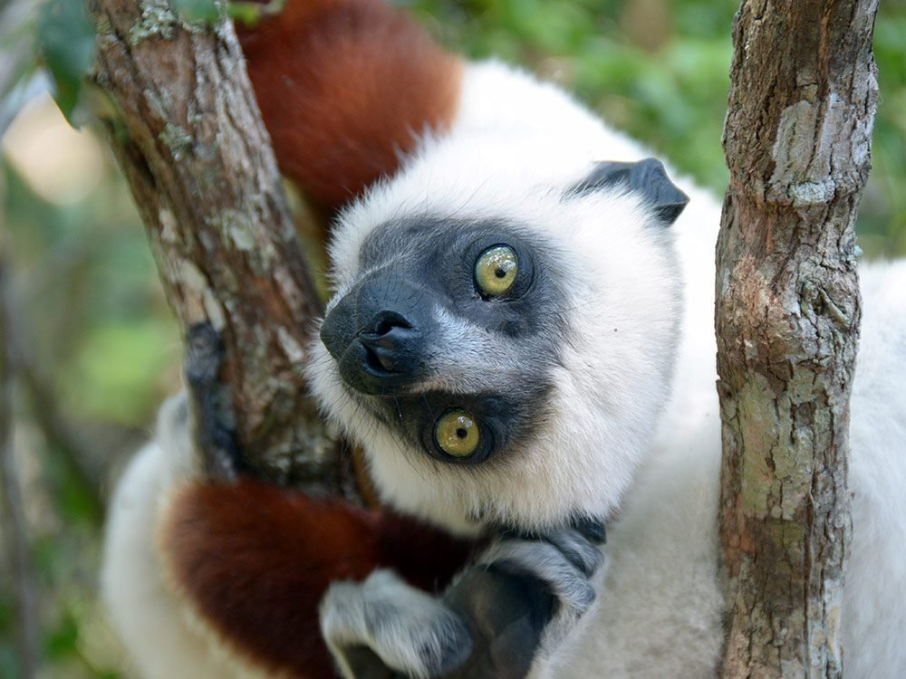 Wildlife in Madagascar