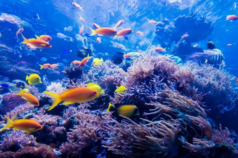 ocean living space_ocean facts