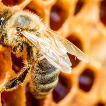 6 Simple Things You Can Do Right Now to Help Save the Bees