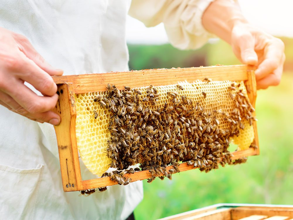 Save the bees - become a beekeeper