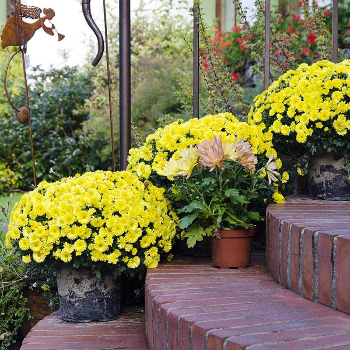 flower pots yellow brick steps