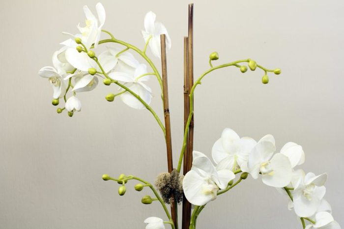 Artificial flower plant of silk white orchids with green buds and two wooden supports. Plant of silk white flowers and plastic green buds with wood sticks for support.