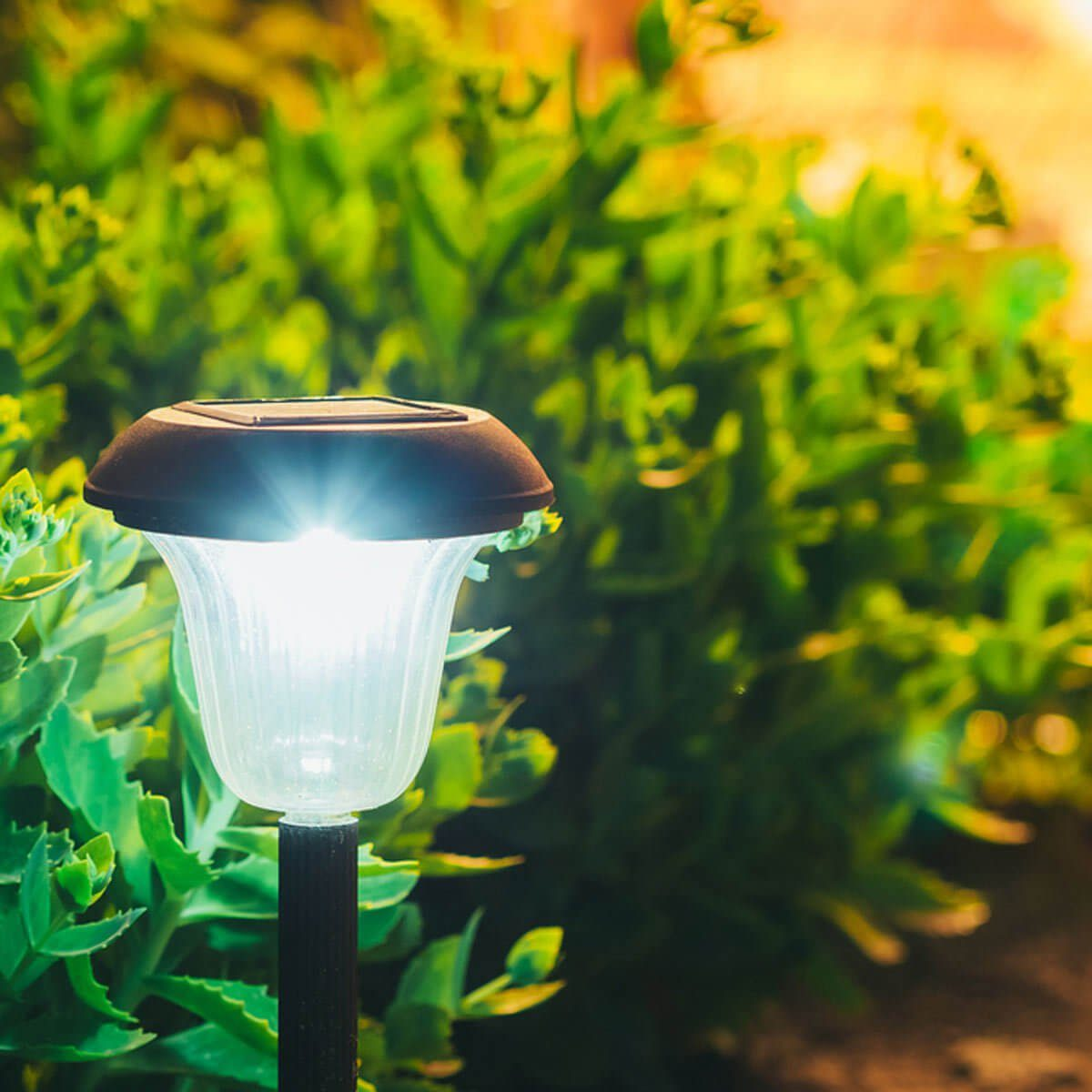 outdoor solar path lights
