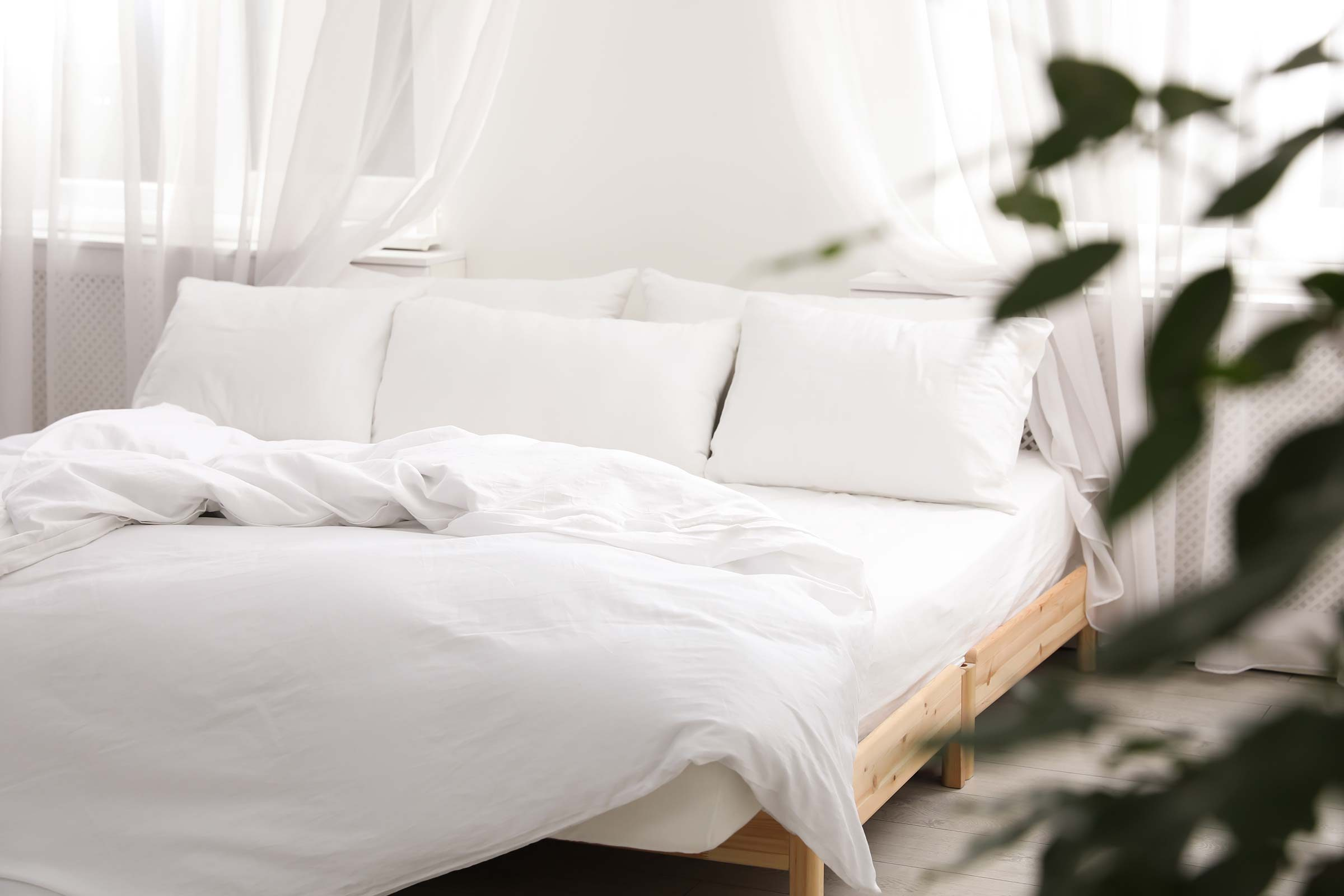 bed pillows plant