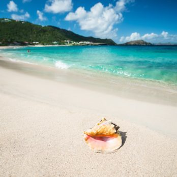 Shell in a Caribbean sea