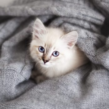See the Cutest Cat Breeds as Kittens